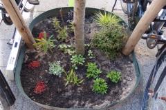 Aanplant boomspiegeltuintje