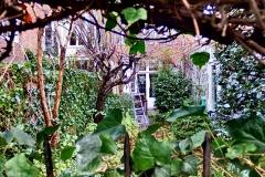 Doorkijkje Obrechtstraat (tuinonderhoud) Den Haag