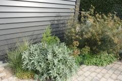 De beplanting tegen gevel vormt een contrast met de strakke lijnen van het huis. O.a. Salvia, Foeniculum 'Giant Bronze', Asperge. Euphorbia characias 'Wulfenii' en muurleeuwenbekjes.