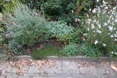 Na aan de zanderige bodem van dit verhoogde plantbed Bentoniet en kalk te hebben verbeterd hield de grond water en voedsel beter vast. In combinatie met planten die geschikt zijn voor deze plek een leuk resultaat. Tuin Mariette Den Haag.