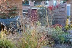 Grassen en vaste planten telkens weer leuk