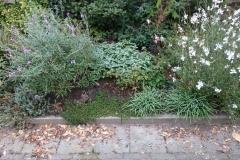 Na de zanderige bodem van dit verhoogde plantbed met Bentoniet en kalk te hebben  verbeterd hield de grond nu wel water en voedsel vast. In combinatie met planten die geschikt zijn voor deze plek een leuk resultaat. Tuin Mariette  Alexanderhof Den Haag.