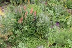 Informele beplanting die veel insekten trekt