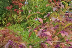 Schitterende herfstkleuren