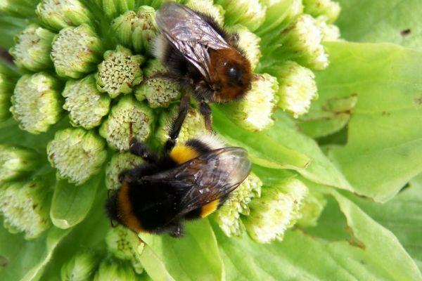 Bijenplanten en vlindertuinen
