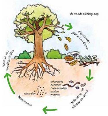 voedselkringloop plantenresten