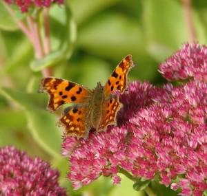 Bloemen vlinders aantrekken