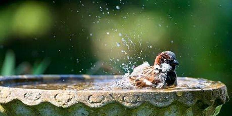 vogels in de ecologisch tuin Den Haag