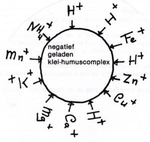 afbeelding klei-humus complex